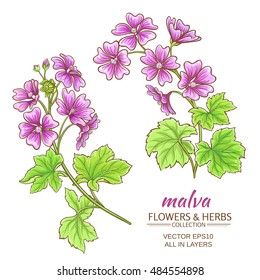 malva flowers vector set on white background