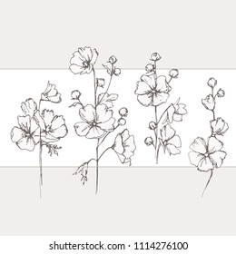 Malva sylvestris. Wild pink mallow. Wildflowers. Flowering in summer, medicinal plants.