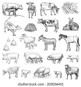 Domestic Animals Draw High Res Stock Images Shutterstock