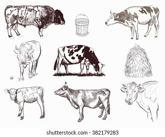 mammals vector set of different type of cows
