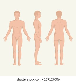man body anatomy, front, back and side standing vector human poses