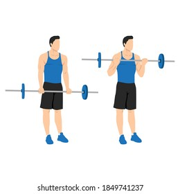 Man doing Barbell curls exercise. Standing bicep curl.Arm workout. Flat vector illustration of a fitness man isolated on white background