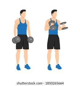 Man doing standing dumbbell bicep hammer curls. Flat vector illustration isolated on different layer. Workout character