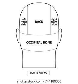 Man head divisions scheme template (back view), vector illustration isolated on white background