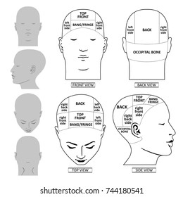 Man head divisions scheme template (front, back, top, side views), vector illustration isolated on white background