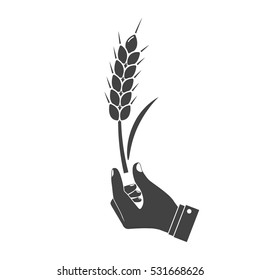 Man holding in hand wheat ear, black icon isolated on white background. Wheat spike holding farmer, peasant. Development agriculture, farming. Symbol of harvest. Vector illustration silhouette design.