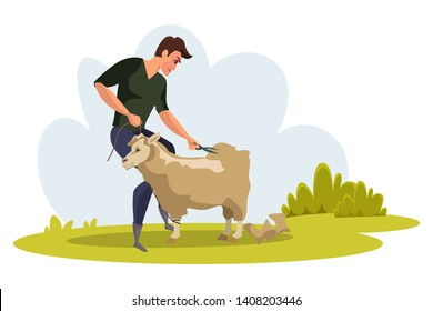 Man shearing sheep flat vector illustration. Young farmer using clippers to cut wool. Male shearer standing near merino lamb, ewe. Eco, green fleece production. Farming, agriculture in rural area