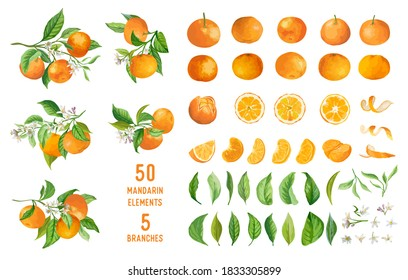 Mandarin fruits, flowers, leaves vector watercolor illustration. Set of whole, cut in half, sliced on pieces fresh mandarins, twisted peel isolated on white. Vibrant juicy ripe citrus collection