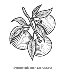 Mandarin orange citrus exotic fruit sketch engraving vector illustration. Scratch board style imitation. Black and white hand drawn image.