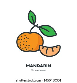Mandarin orange fruit icon, outline with color fill style vector illustration, whole fruit with leaves and segment