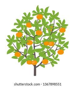 Mandarin tree. Vector illustration. Ripe fruit orange mandarin plant. Flat vector color Illustration clipart.