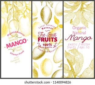 Mango fruit banner set. Hand drawn vector fruit illustration. Engraved style retro exotic background.