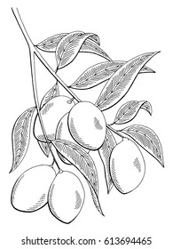 Mango fruit graphic branch black white isolated sketch illustration vector