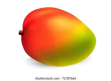 Mango fruit on white background. Gradient mesh vector based  illustration