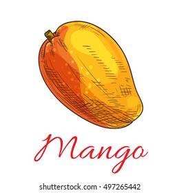 Mango fruit vector color sketch icon. Isolated whole exotic tropical mango product emblem for juice or jam label, drink sticker, farm store design element
