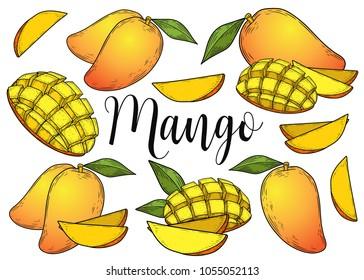 Mango fruit vector set. Engraved organic food hand drawn sketch engraving illustration. Colorful mango isolated on white background.
