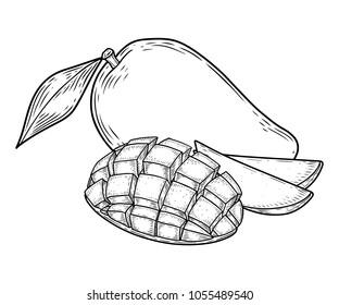 Mango fruit vector set. Engraved organic food hand drawn sketch engraving illustration. Black white mango isolated on white background.