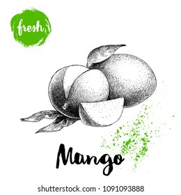 Mango fruits sketch style vector illustration. Hand drawn poster. Exotic fruits composition with leaves and slice. Retro illustration isolated on white background.