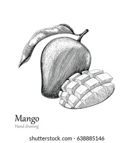 Mango hand drawing engraving style.Hand drawing black and white line by pen.