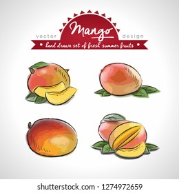 mango. Hand drawn collection of vector sketch detailed fresh fruits. Isolated