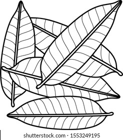 Mango leaves. Vector outline icon.