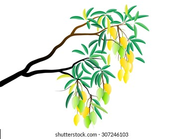Mango tree branch with fruits on white background ,Vector illustration