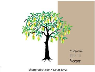 Mango tree on white background,Vector illustration