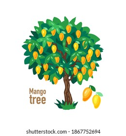 Mango tree. Tropical green tree with mangoes. Plant isolated on white background. Vector eps