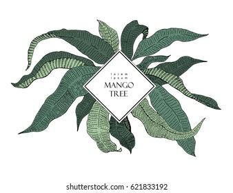 Mango tree vintage illustration. Botanical mango fruit illustration. Leaves. Vector illustration. Logo template
