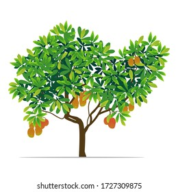 mango tree with white background. illustration vector
