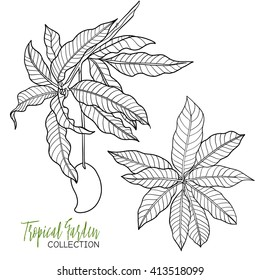 Mango. Tropical plant. Vector illustration. Coloring book for adult and older children. Coloring page. Outline drawing.