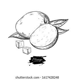 Mango vector drawing. Hand drawn tropical fruit illustration. Engraved summer fruit. Whole and sliced objects with leaves. Botanical vintage sketch for label, juice packaging design, menu