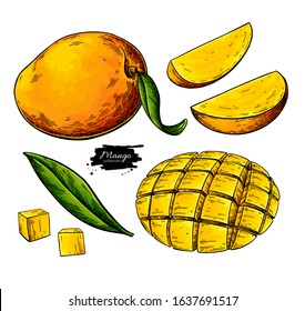 Mango vector drawing. Hand drawn tropical fruit illustration. Whole and sliced objects with leaves. Botanical vintage sketch for label, juice packaging design, menu