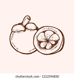 mangosteen skech handdrawn