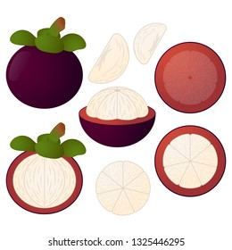 Mangosteen vector illustration set. Whole, sliced and halved Mangosteen graphics.