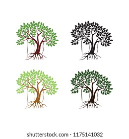 mangrove tree vector illustration with colors