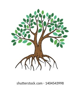 mangrove tree vector on white background