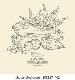 Manihot esculenta: cassava root, tuber, manihot slice and leaves. Vector hand drawn illustration.