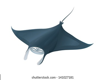 Manta Ray Fish Ocean Isolated on White