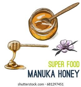 Manuka honey. Full color super food hand drawn sketch vector illustration.