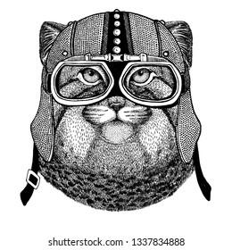 Manul, cat wearing motorcycle, aero helmet. Biker illustration for t-shirt, posters, prints.