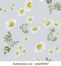 Many daisies scattered randomly on gray background. Chamomiles flower hand drawn drawing. Vector floral seamless pattern. Wild botanical garden bloom.