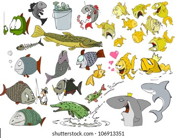 Many different species of fish on a white background