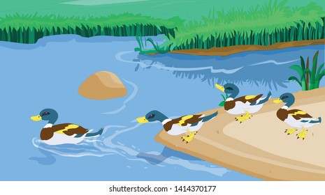 Many ducks roam in the lake and in the lake - vector