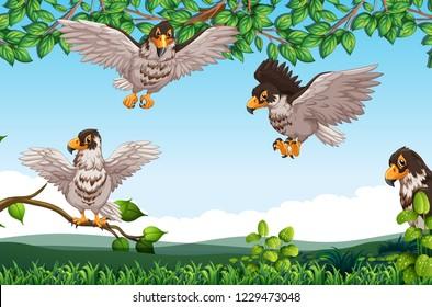 Many hawk in nature illustration