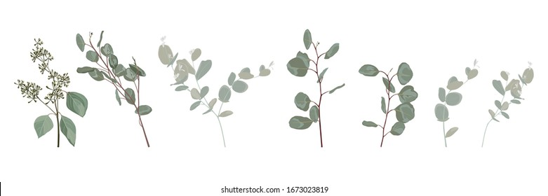 Many kind of Eucalyptus tree branch, designer art watercolor style foliage natural branches leaves elements set, collection. Cute elegant illustration for design.