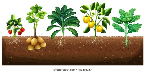Many kinds of vegetables planting on ground illustration