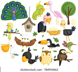 many type of bird in one vector set