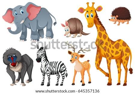 many types wild animals illustration のベクター画像素材