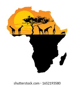 Map of Africa. Safari sunset with giraffe group. Savanna acacia tree. Travel invitation card for Africa nature. Safari trip attraction with animals. Wild Africa beauty tour. Tourist and traveler trip.